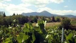 поглед на врхове из винограда Казимира Михајловића