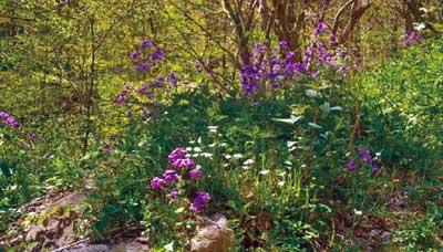 Божансктвен дар природе - цветни врт у самом срцу Радана.