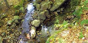 Стазом Раданских вода - Деливоде