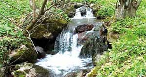 Стазом Раданских вода